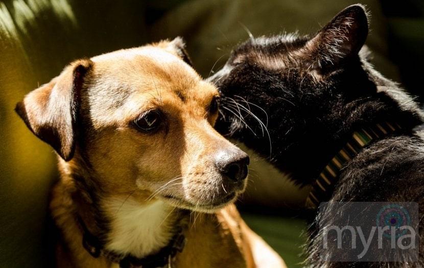 Cat whispering a secret in dog's ear