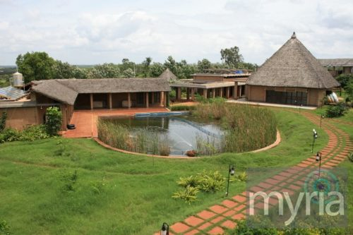 Green living pool with reeds