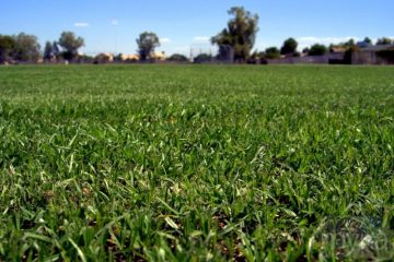 How do I choose the right grass seed for my lawn