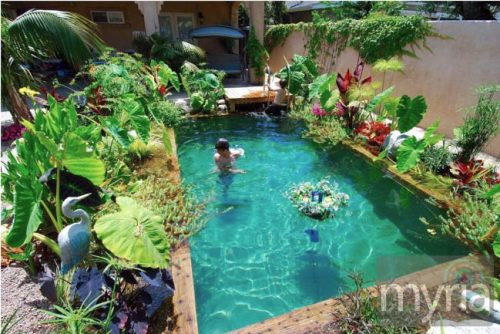 Large plants around a small pool