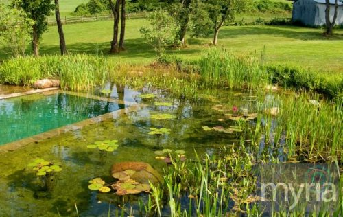 Natural pond-style pool